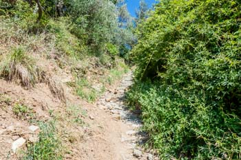 Part of the trail between Monterosso and Soviore Sanctuary, Cinque Terre, Italy